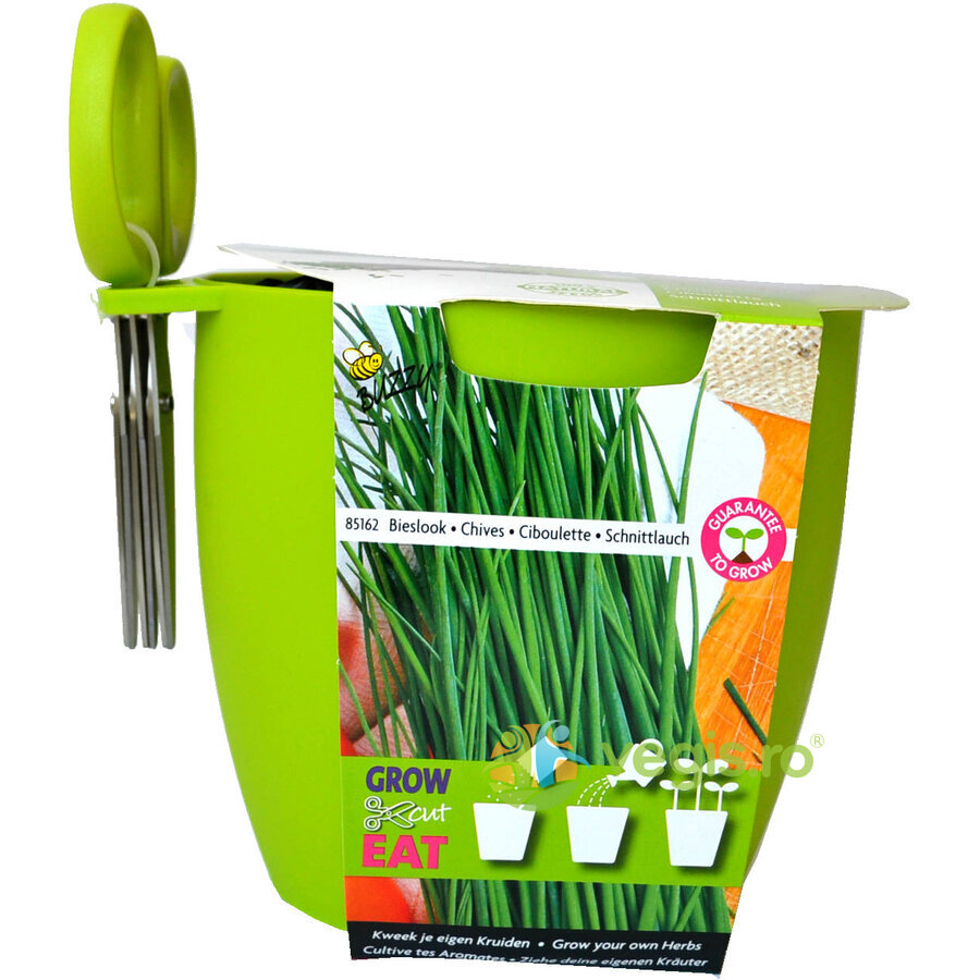 Buzzy Seeds Kit de Cultivat Grow,Cut&Eat Chives + Foarfeca – VERDE