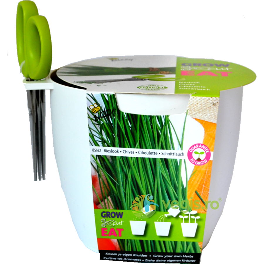 Buzzy Seeds Kit de Cultivat Grow,Cut&Eat Chives + Foarfeca – ALB