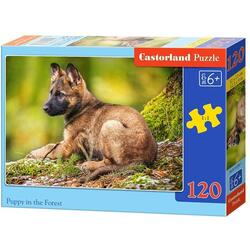 Puzzle 120 Castorland - Puppy in the Forest