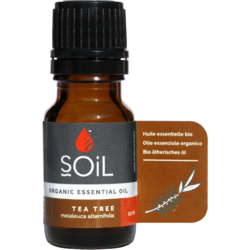 Ulei Esential de Tea Tree (Arbore de Ceai) Ecologic/Bio 10ml SOiL